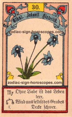 The lily, monthly Capricorn horoscope February